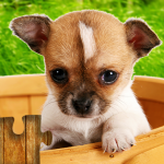 Dogs Jigsaw Puzzles Game s 🐶 28.5 MOD (unlimited money)