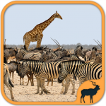 Animals Puzzle Zoo free – games for all ages 5.34.034 MOD (unlimited money)