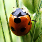 Insects Jigsaw Puzzles  MOD APK2.10.7